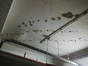chống thấm trần nhà bị dột